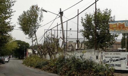 Mas que podar, 'asesinaron' árboles en San Francisco…