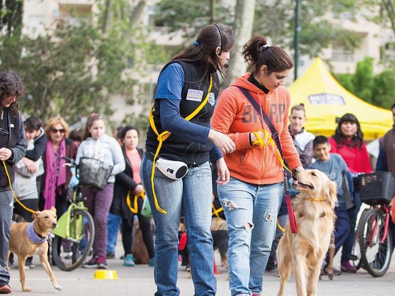 ¿Crisis? Rodríguez Larreta gastó 1.2 millones en un 'Taller de Paseo de Perros'