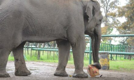clausuraron definitivamente el zoológico de luján