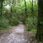 FORO: «LA DECLARACIÓN DE RESERVA DE BIOSFERA DEL PARQUE PEREYRA ESTÁ EN PELIGRO»