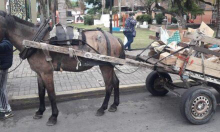 TRÁNSITO MUNICIPAL SECUESTRA CABALLO Y CARRO EN PLENA MITRE Y 14