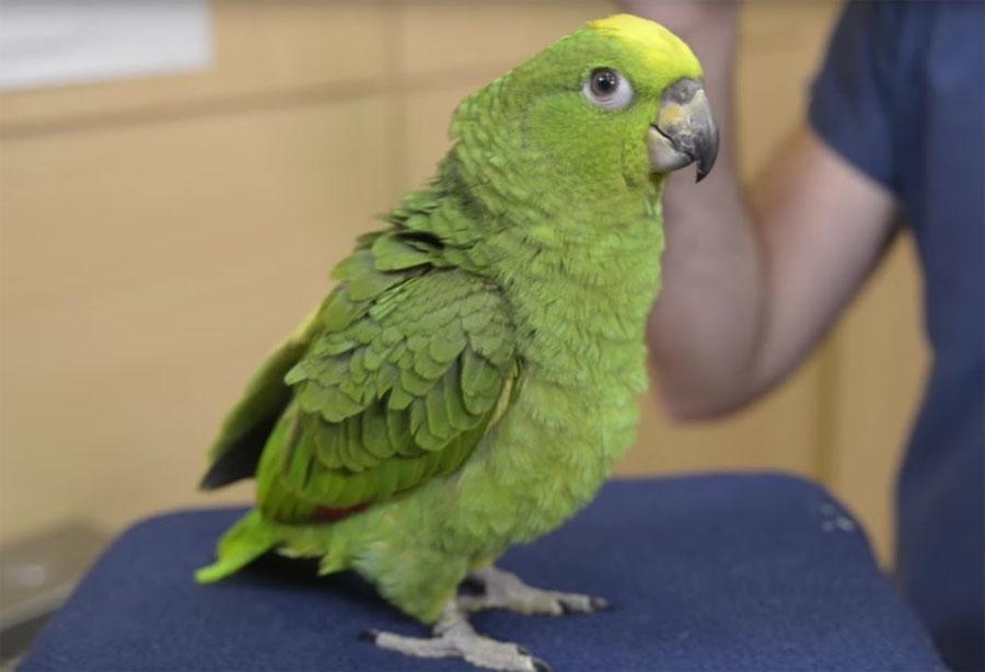 ANIMALES NO TRADICIONALES: SE ABRE EL DEBATE FAMILIAR