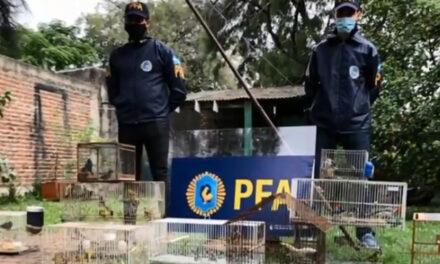 JUSTICIA FEDERAL ALLANÓ VARIOS DISTRITOS DONDE SE RESCATARON AVES EXÓTICAS CUYA VENTA ESTÁ PROHIBIDA