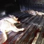 NINGUNA NOVEDAD: DE NUEVO, CAZADORES FURTIVOS DENTRO DE LA E.C.A.S.