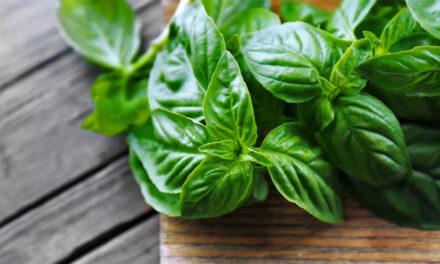hierba ayudaría a prevenir el Alzheimer